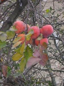 arbre-cakis