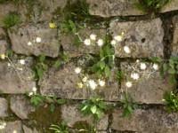 fleursur mur